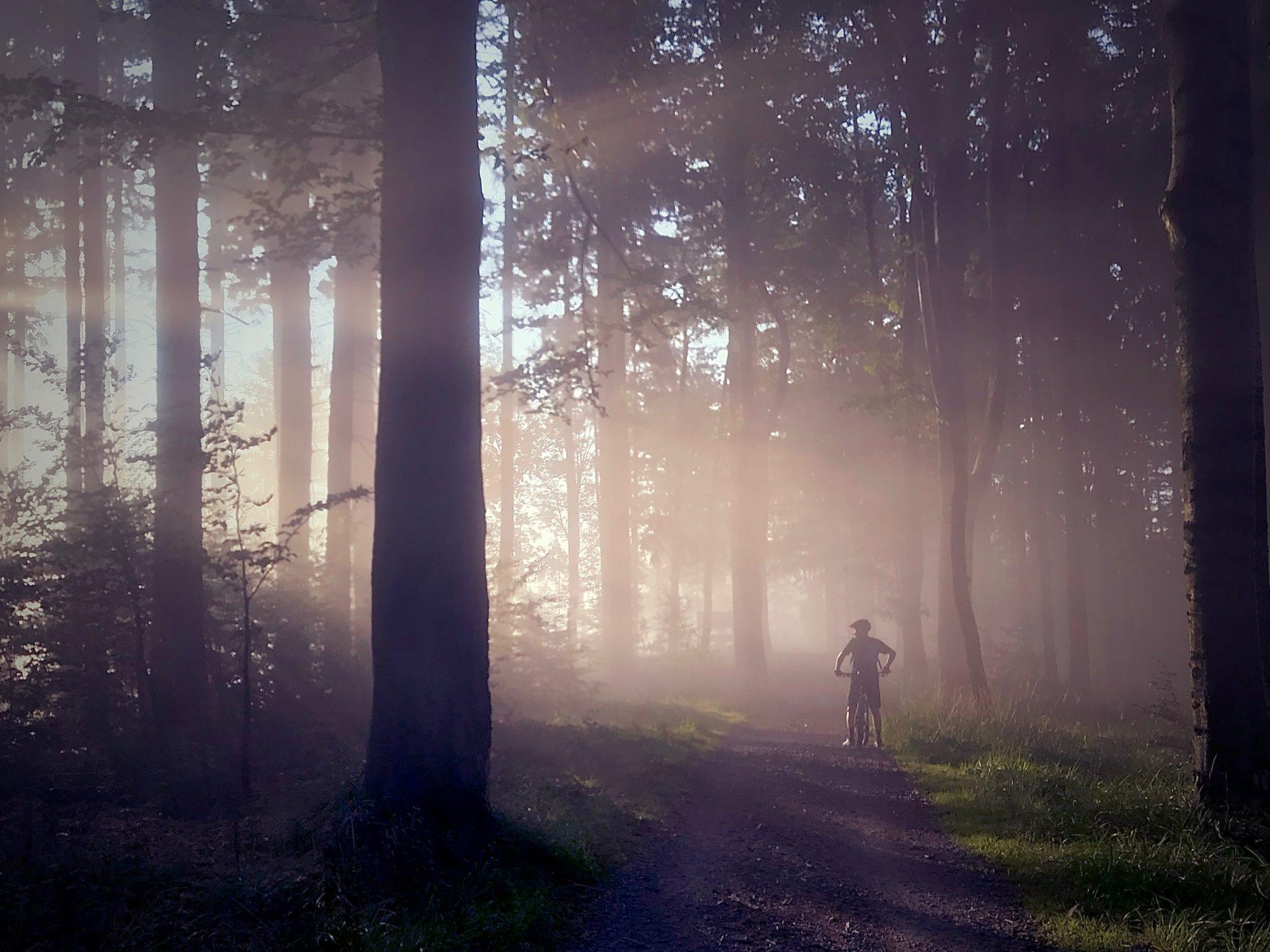 mountain biking in the misty woods